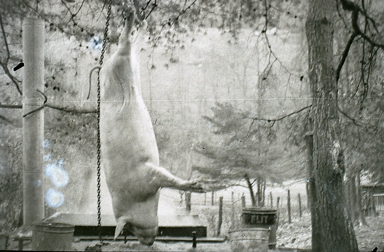 William Hayes Photographs