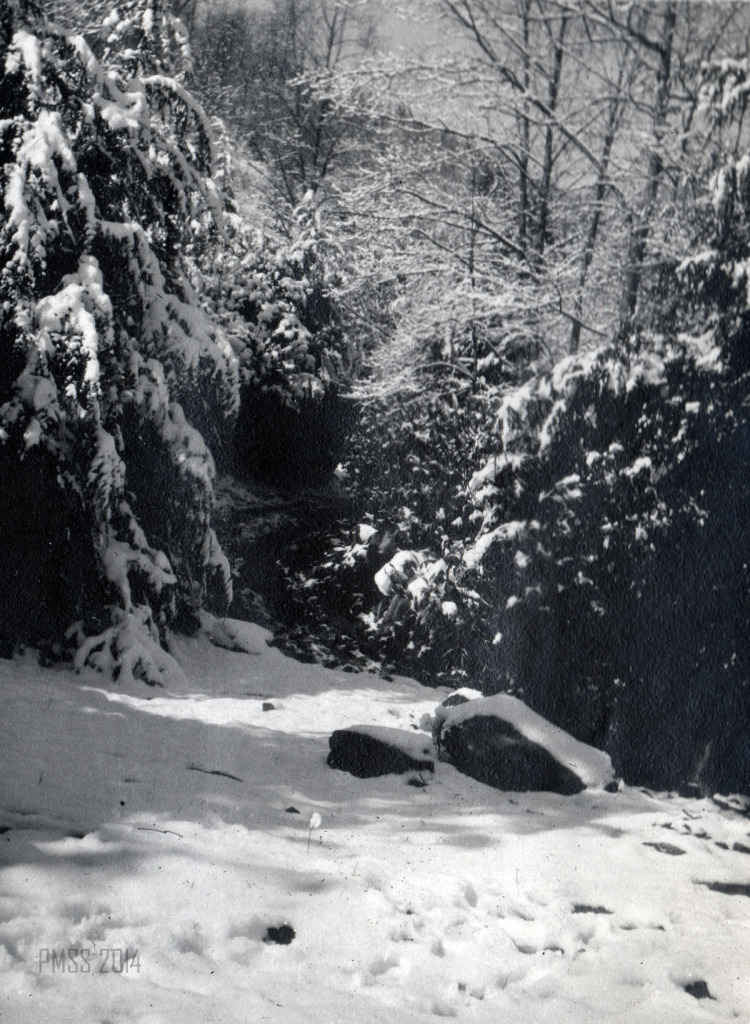 View of the lush hemlock trees and their boughs burdened by snow, that abounded in the forests surrounding Pine Mountain in the early decades of the School.