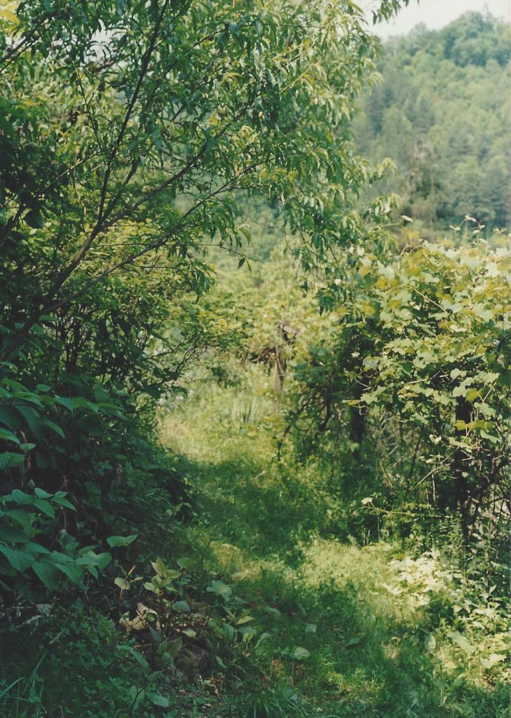 hayes_garden_12